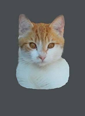 Photograph - Orange And White Cat by Pamela Walton
