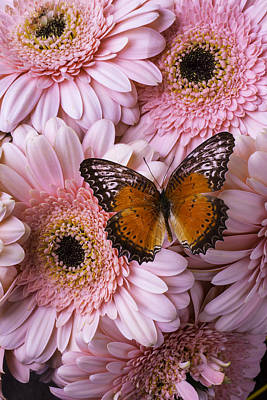 Chrysanthemums Photograph - Orange Butterfly On Pink Daisy by Garry Gay