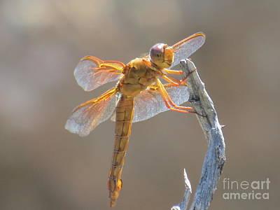 Dragonfly 5 Art Print