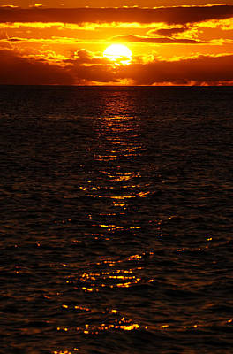 Photograph - Orange Glow by Pamela Walton