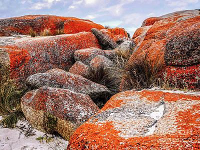 Photograph - Orange Lichen Landscape by Lexa Harpell