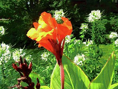 Photograph - Orange Lily by Stephanie Moore