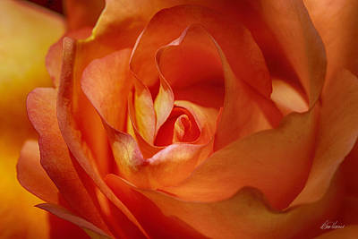Photograph - Orange Passion by Diana Haronis