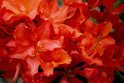 Digital Art - Orange Red Azaleas by Dreamweaver Gallery