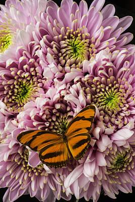 Orange Striped Butterfly Art Print by Garry Gay
