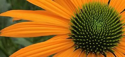 Photograph - Orange Surprise by Bruce Bley