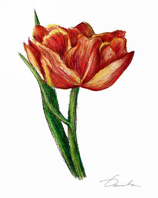 Orange Tulip Art Print by Danuta Bennett
