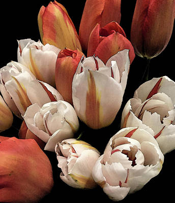 Photograph - Orange Tulips by David Pantuso
