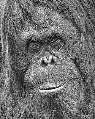 Orangutan Digital Art - Orangutan Portrait by Larry Linton