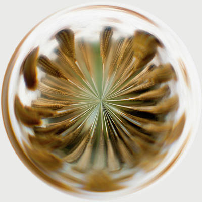 Photograph - Orb Image Of A Dandelion by Brenda Jacobs