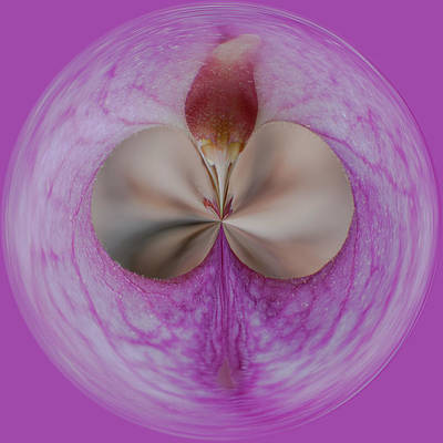 Photograph - Orb Image Of A Ladyslipper by Brenda Jacobs