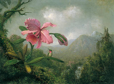 Painting - Orchid And Hummingbird Near A Mountain Waterfall by Martin Johnson Heade