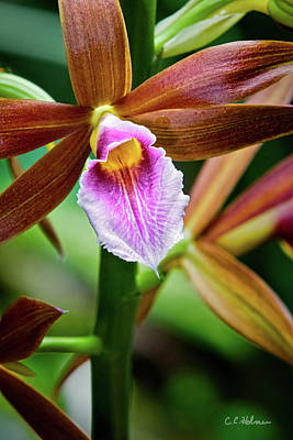 Photograph - Orchid by Christopher Holmes