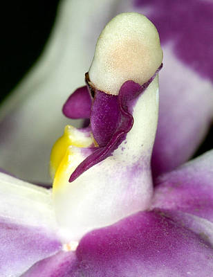Photograph - Orchid Flower Bloom by C Ribet