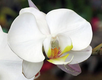 Jim Nelson Photograph - Orchid by Jim Nelson