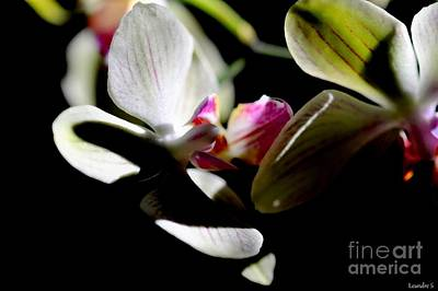 Photograph - Orchid by Sylvie Leandre