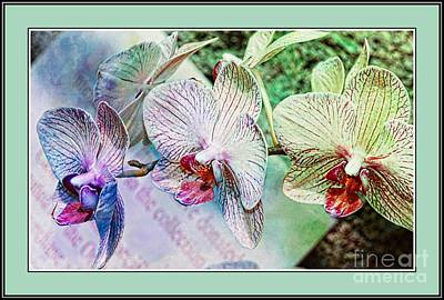 Orchid Trio Art Print by Kathleen Struckle