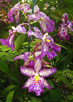 Art Print featuring the photograph Orchids - Purple Polka Dots by Kerri Ligatich
