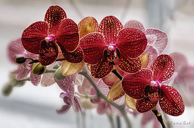 Photograph - Orchids by OLena Art Brand