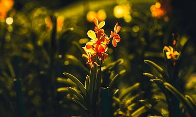 Photograph - Orchids by Pixabay