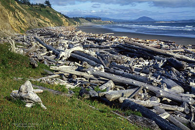 Photograph - Oregon Driftwood by Roy Kastning