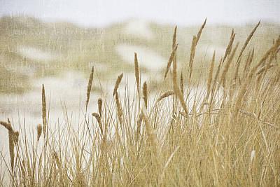 Photograph - Oregon Dunes by Bonnie Bruno