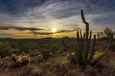Photograph - Organ Pipe Cactus Sunset Part Two  by Saija Lehtonen