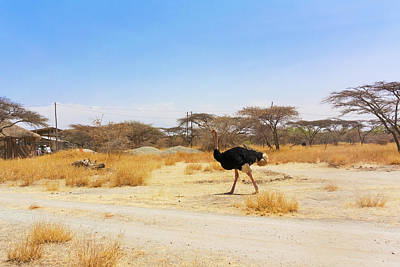Photograph - Ostrich In National Park In Ethiopia. by Marek Poplawski