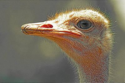 Photograph - Ostrich Portrait by Patrick Kain