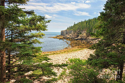 Photograph - Otter Cliff's Acadia National Park by Elizabeth Dow