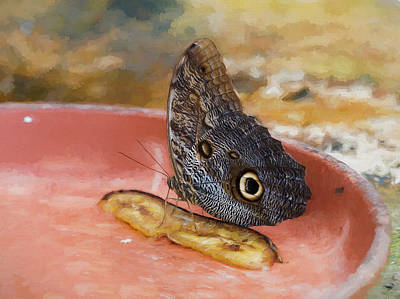 Photograph - Owl Butterfly 2 by Paul Gulliver