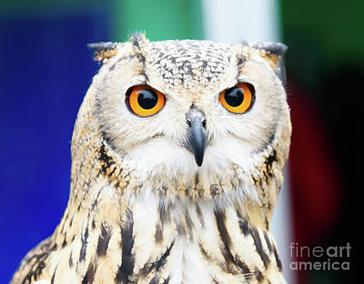 Photograph - Owl by Colin Rayner