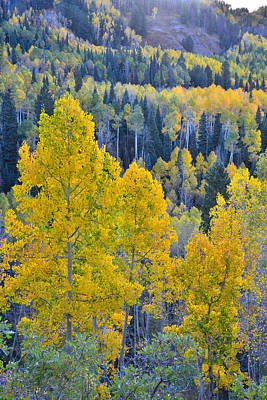 Photograph - Owl Creek Pass Aspens by Ray Mathis
