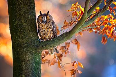 Yellow Digital Art - Owl by Maye Loeser