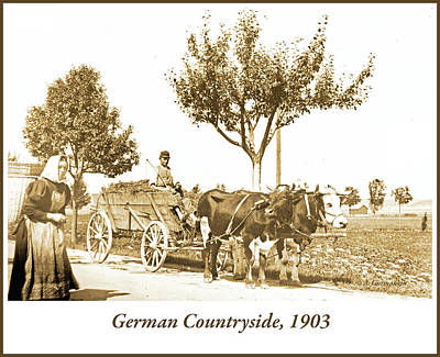 Photograph - Oxcart, German Countryside, 1903 by A Gurmankin