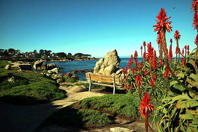 Photograph - Pacific Grove Beauty by Joyce Dickens