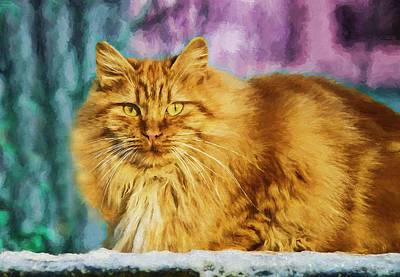 Photograph - Painted Kitty by Ericamaxine Price