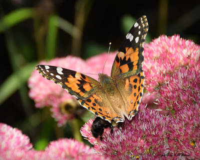 Fuzzy Digital Art - Painted Lady Butterfly by Kathy M Krause