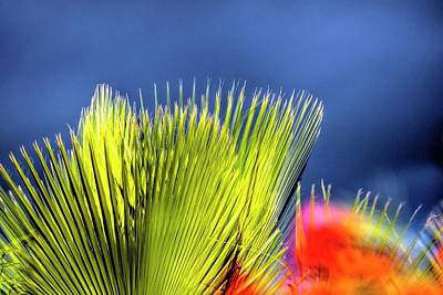 Photograph - Palm And Flower 32733 by Jerry Sodorff