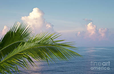 Relaxation Photograph - Palm And Ocean by Blink Images