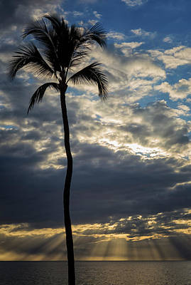 Photograph - 1 Palm At 5 Palms by Randy Hall
