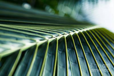 Thomas Kinkade Rights Managed Images - Palm Dreams Royalty-Free Image by Sharon Mau