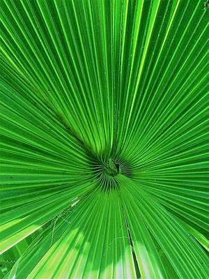 Photograph - Palm Frond by Kay Gilley