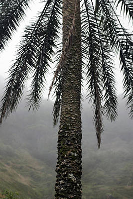 Photograph - Palm, Koolau Trail, Oahu by Kenneth Campbell