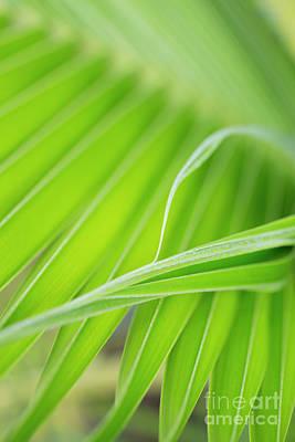 Palm Leaf Detail Art Print by Charmian Vistaunet