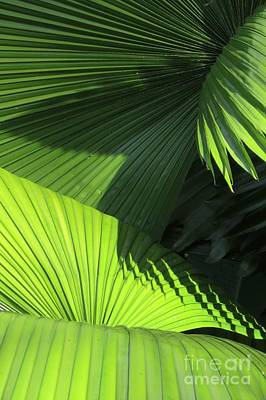 Photograph - Palm Patterns by Frank Townsley