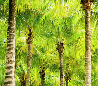 Royalty-Free and Rights-Managed Images - Palm Tree Fronds by Tim Hester