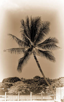Photograph - Palm Tree by Pamela Walton