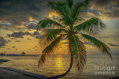 Photograph - Palm Tree Sunrise by David Zanzinger