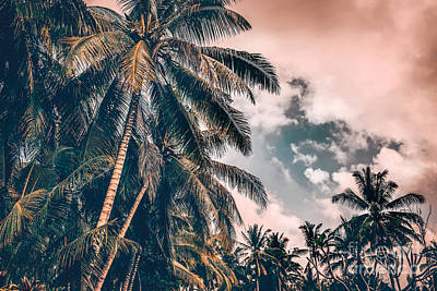 Photograph - Palm Trees On Sunset by Anna Om